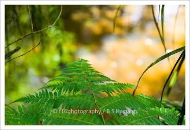 f16_LANTA_A_Terrace-Crossing_Nthridge-2