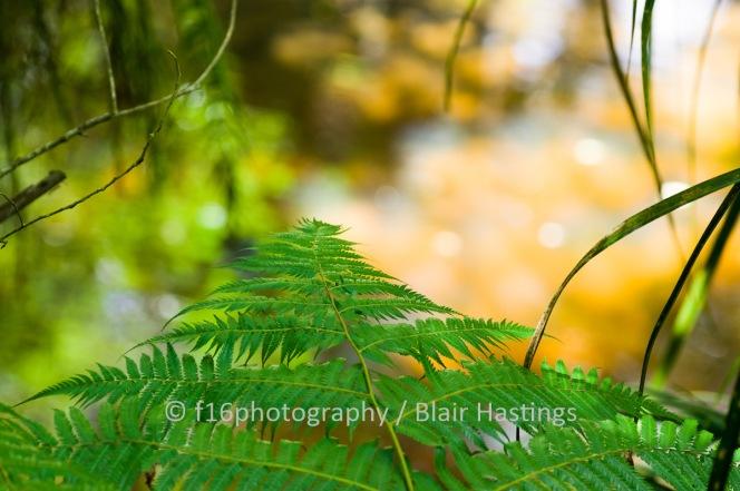 f16_LANTA_A_Terrace-Crossing_Nthridge-HIGHRES-2