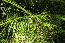 f16_LANTA_C_Conservatory_Nthridge-HIGHRES-39