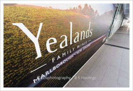 f16-LANTA-Yealands--4